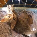 57250a92ebc1e-cat